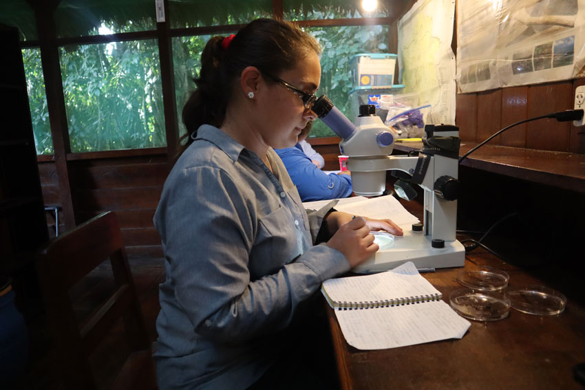 student using microscope to study in the Amazon rainforest
