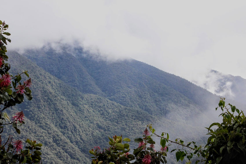 Mountains in the Amazon rainforest
