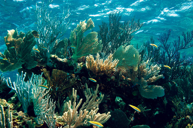 A portion of Gaulin reef