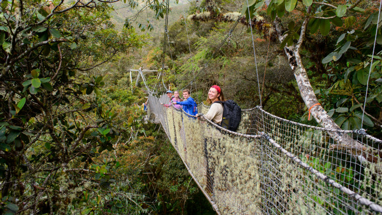 Students cross a rope bridge surround by a tropical ecosystem while in Peru.